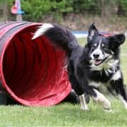 dressage canin au parc de Brières les Scellés