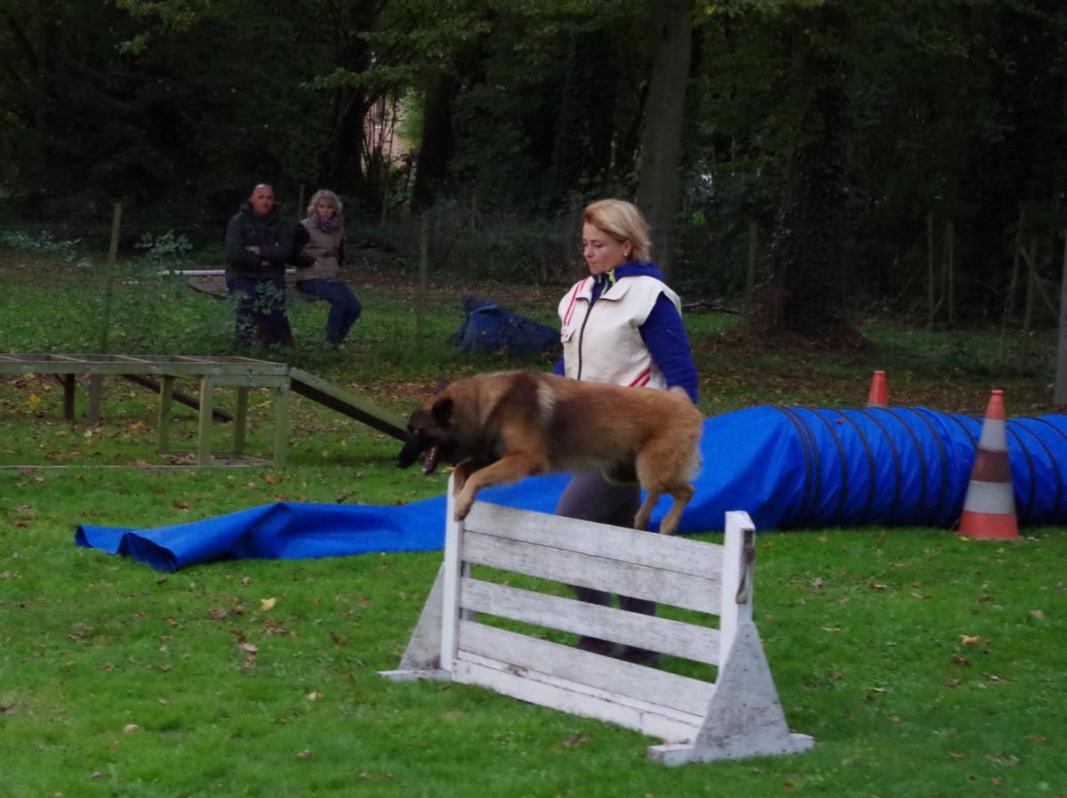 concours de chien de Brières du 28-29 Octobre